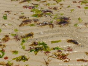 Small, soft, seaweeds at the seaside in Studland Bay