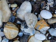 Chalk pebble with worm holes amongst flints on the beach at Studland in Dorset, England