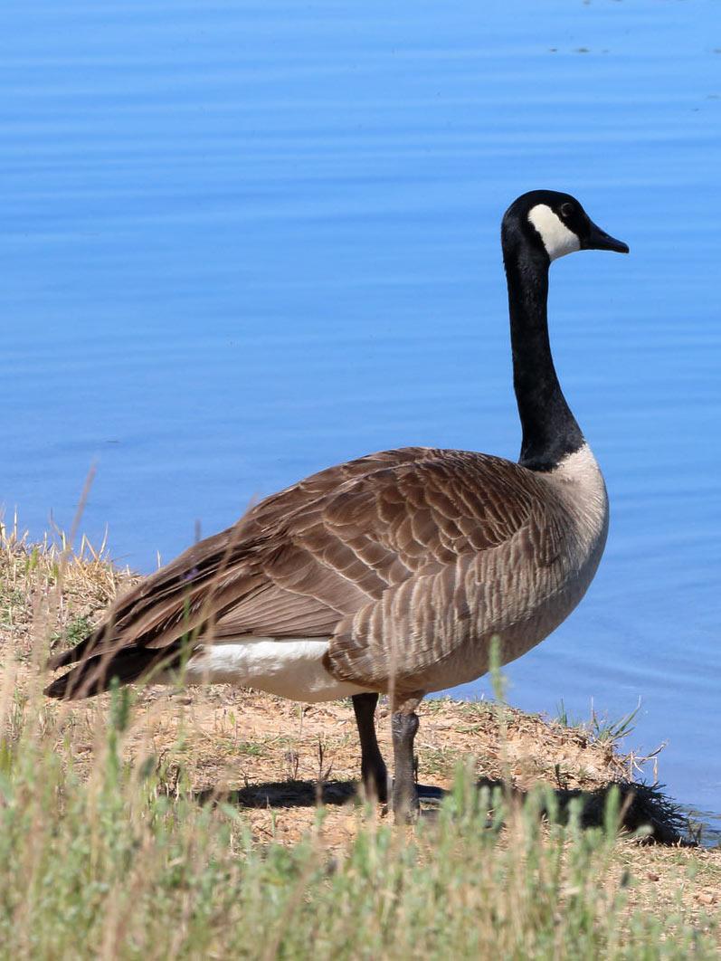 Stafford Lake – Nature in Novato