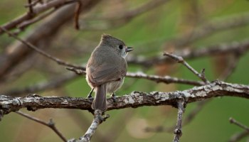 How to Learn Birdsong – Nature in Novato
