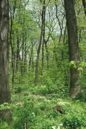 forest-spring-dupage-b