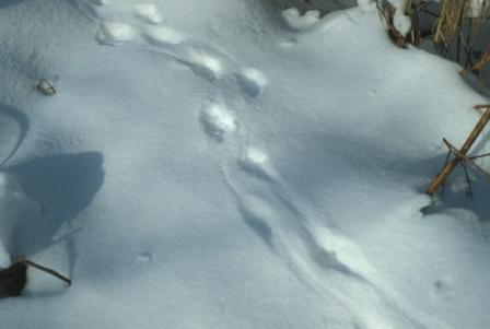 mink-drag-tracks-b2