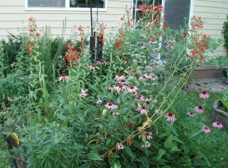 Prairie garden 26JL09 b