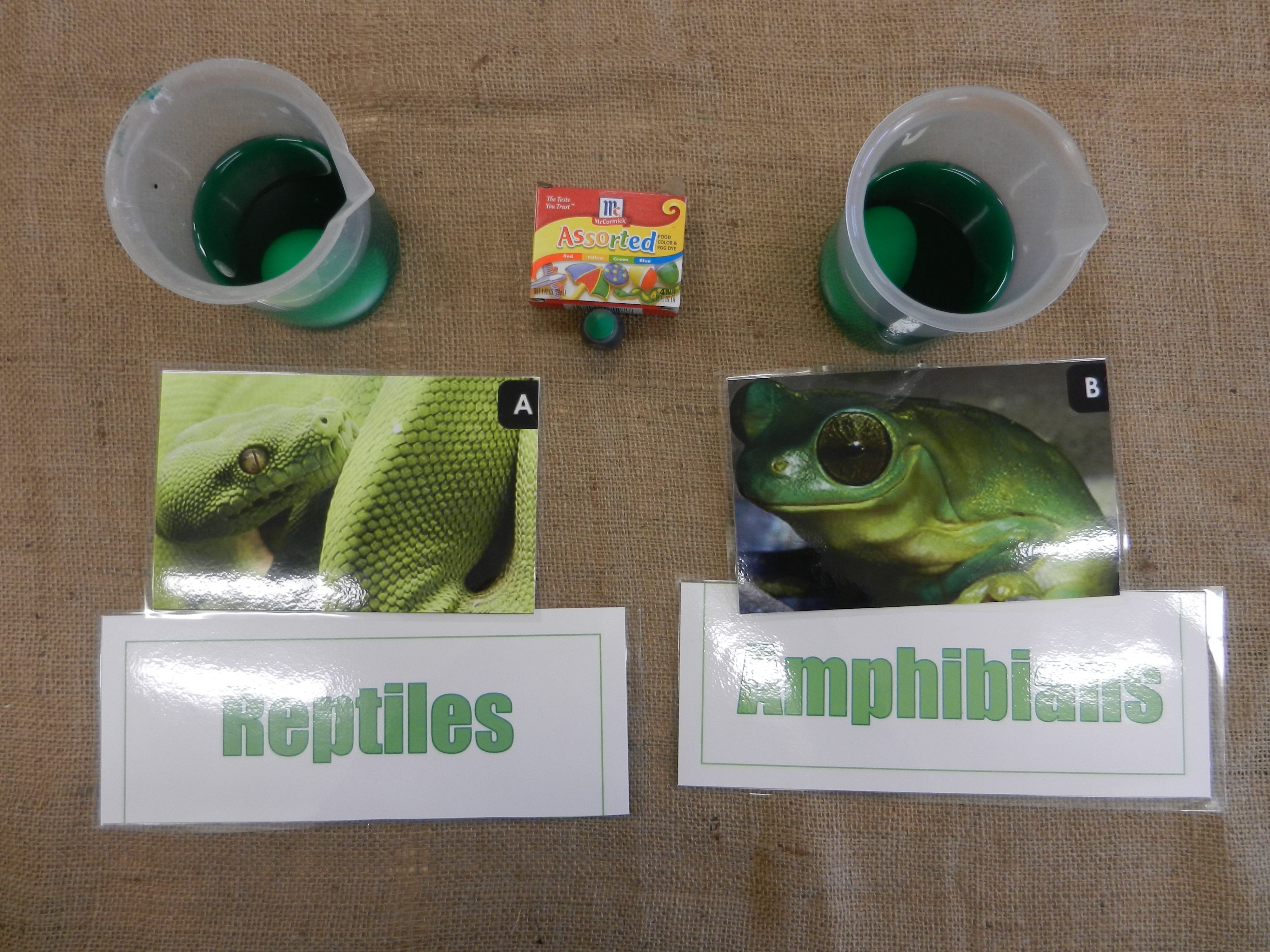 Hop Into Acton With The Reptile Vs Amphibian Skin Test