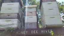 Honey Bee Hives at Essex County Environmental Center