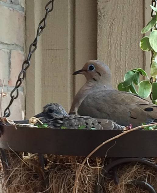Teenaged Dove and Parent!