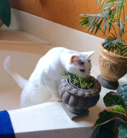 Biscuit and Cat Grass