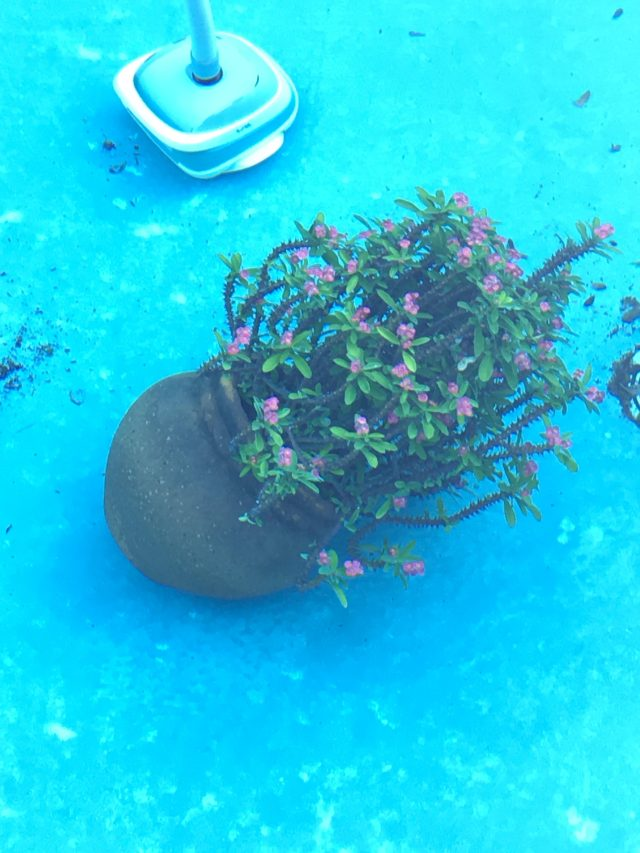 Submerged Crown of Thorns