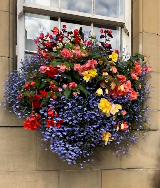 Floral hanging basket.  Stirling, Scotland along the River Forth