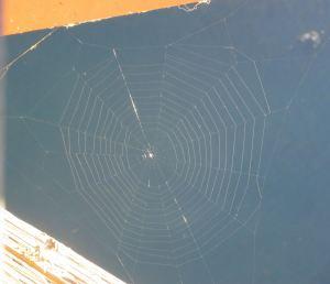 spider, spider web, Fair Oaks Bridge, fisherman, American River