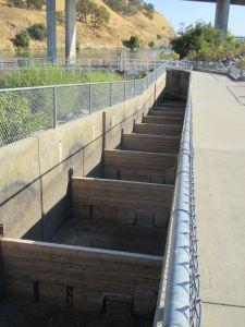 fish ladder, Chinook salmon, American River, Nimbus Fish Hatchery