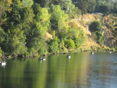 lineof-boats, fishermen, fishing, boats, salmon, river, American River, Fair Oaks bridge
