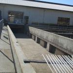 fish ladder, Chinook Salmon, spawning, American River, Nimbus Fish Hatchery