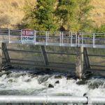 Nimbus Fish hatchery, Chinook salmon, salmon, Visitor Center, students, field trip, water, American River, Nimbus Dam, visitors, tours, fishing, fisherman
