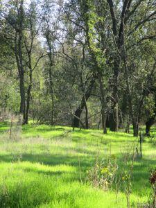 green grass, American River Parkway, jedediah Smith Memorial Trail, bike trail, cyclist, bike path, trees, oak woodland