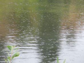 rain, raindrops