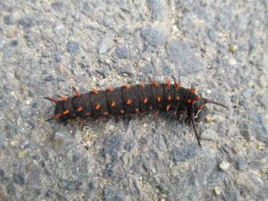 caterpillar, Amerian River Parkway, cyclist, bike trail, morning