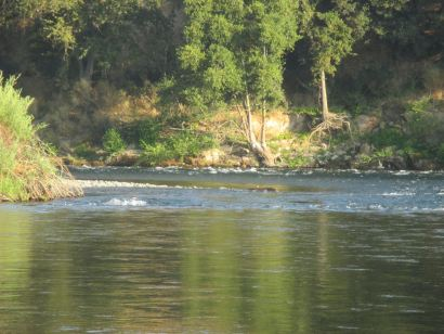 American River, salmon, seagulls, Fair Oaks, fishing, morniing