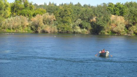 seagulls fly, American River, fishermen, salmon, boat