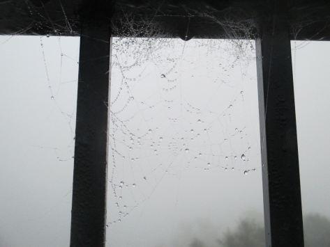 spider web, Fair Oaks Bridge, mornings, rain, American River, salmon, seagulls, ducks,