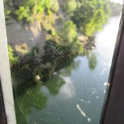 spider web, experience, beauty, Fair Oaks Bridge, American River, Fair Oaks Bluffs