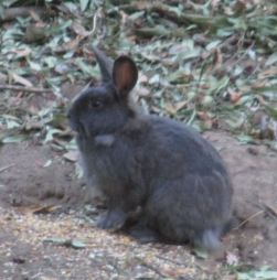 rabbit, Fair Oaks, Fair Oaks Bridge, peaceful, peace