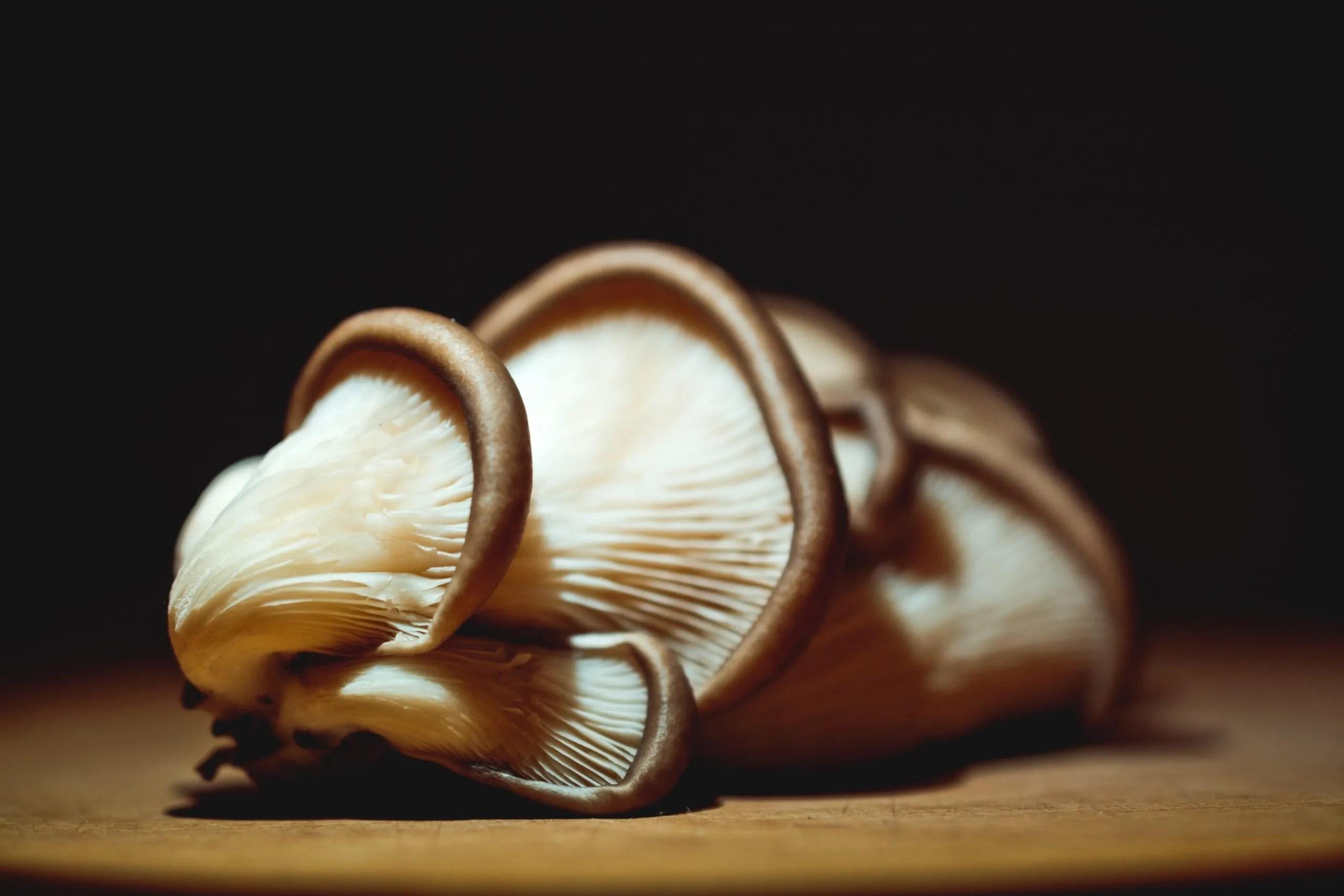 Black Oyster Mushrooms