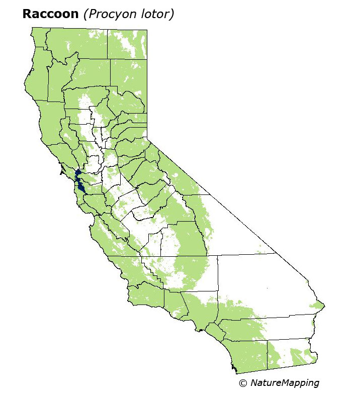 California Range Map Raccoon Procyon Lotor