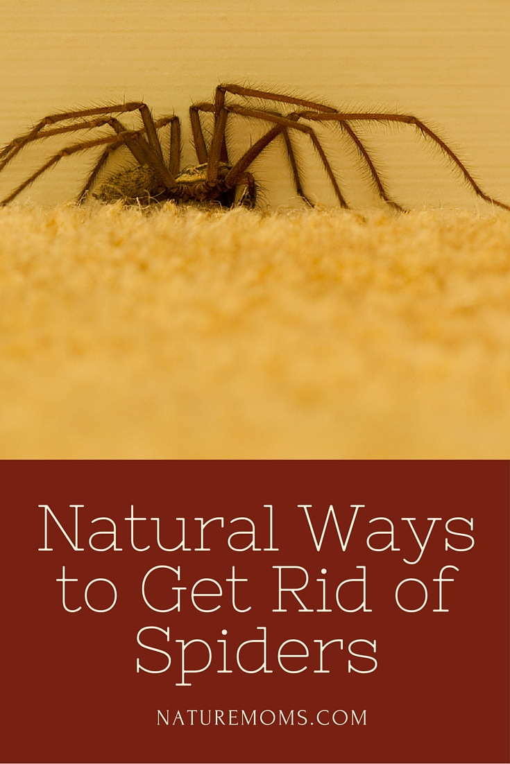 How to get rid of spiders 57