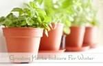 Growing Herbs Indoors For Winter