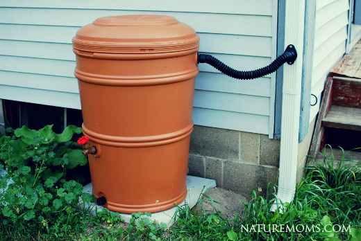 rain barrel in the garden