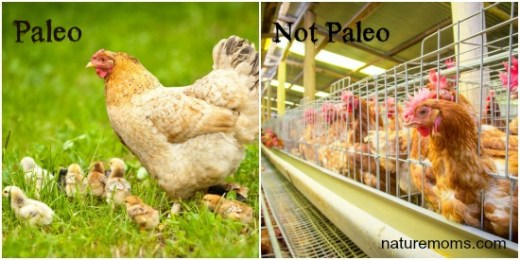 paleo versus not paleo