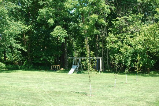 suburban homestead with fruit trees