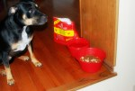 Introducing Raw Food Into Your Dog's Diet