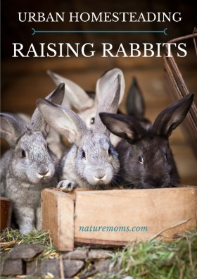 Urban Homesteading Raising Rabbits