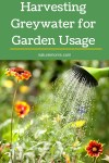 Harvesting Greywater for Garden Usage