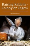 Raising Rabbits – Colony or Cages?