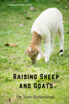 Raising Sheep and Goats: A Source For Natural Products