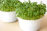 Microgreens are the Houseplants You Can Eat