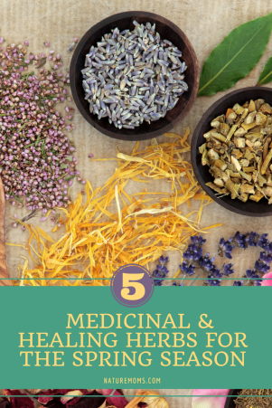 Healing Herbs for Spring