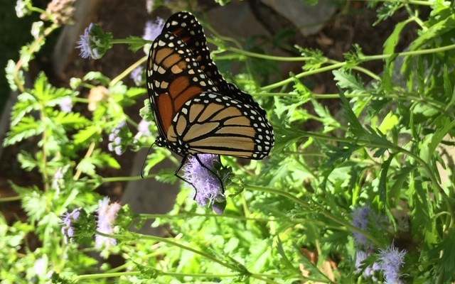 Fall Monarchs & Seed Head Harvests with Kids