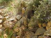 climbing straight up a rock wall