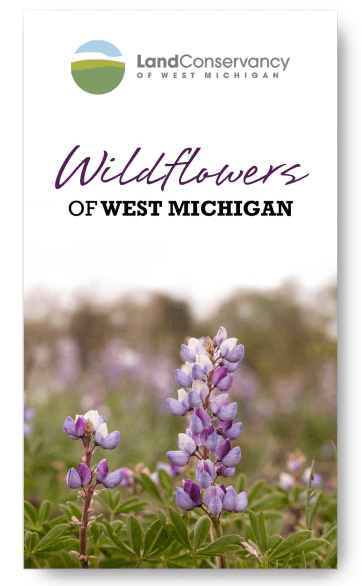 Download Wildflower Guide PDF