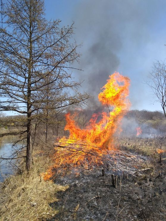 Prescribed burn at Lamberton Lake Fen Nature Preserve