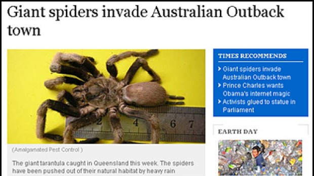 How the eastern tarantula story appeared in the Times Online.