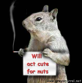 Certainly getting rid of grey squirrels is a good idea, because of their effect on the red squirrel and on woodland in ...