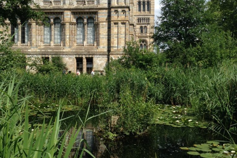 Save living wildlife from the Natural History Museum