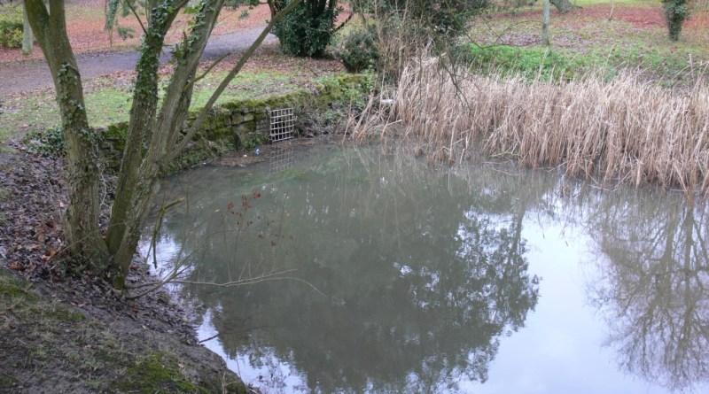 Pond at Medina Arboretum