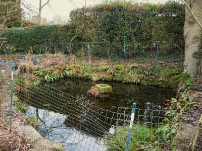 The wildlife pond, 2010