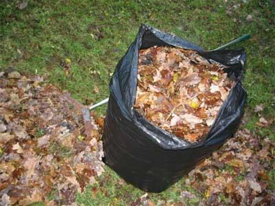 Leaves in bags